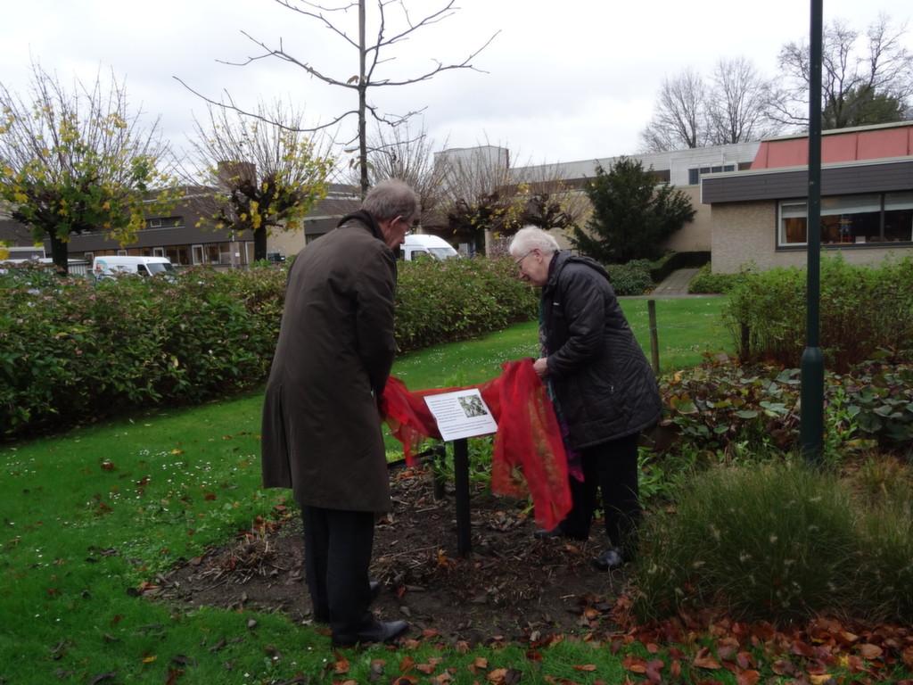 laverhof plant boom voor zusters jmj